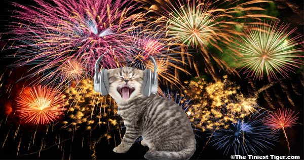 Fireworks with kitten and headset