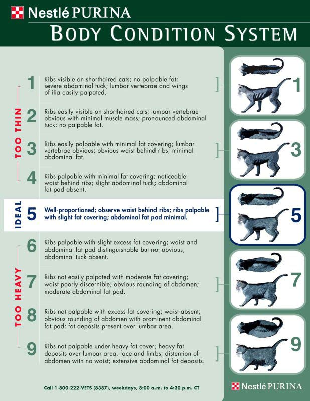 Purina Cat Body Condition Chart