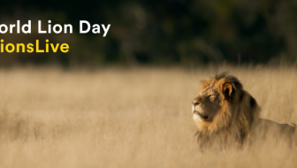 Pledge to Save Lions on World Lion Day #LetLionsLive