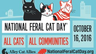 National Feral Cat Day 2016  Alley Cat Allies in Action