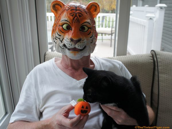 Paul in Tiger Mask