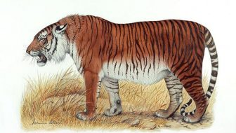 Can The Caspian Tiger Make a Comeback?