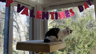 Cats Celebrate Valentine's Day
