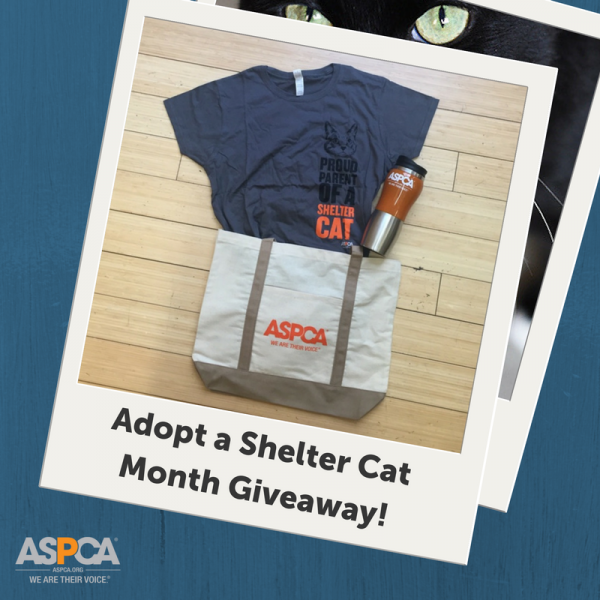 Adopt a Shelter Cat Month Giveaway