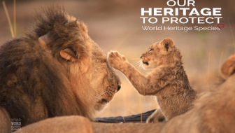 Sign To Save Lions in the Name of Cecil #WorldHeritageSpecies