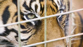 Ohio Steps Up As A Leader on Exotic Animal Laws