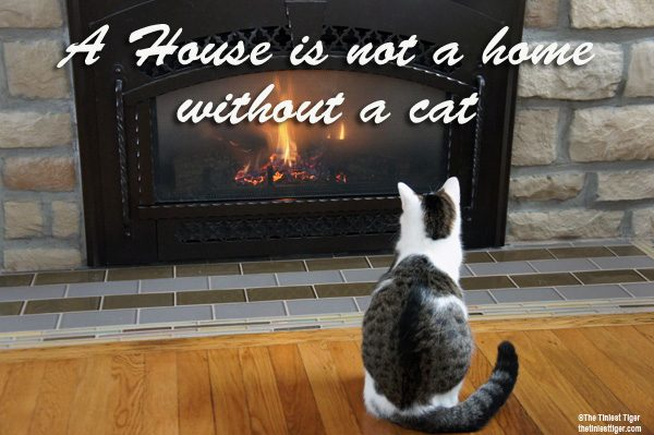 Annie Fireplace A house is not a home without a cat