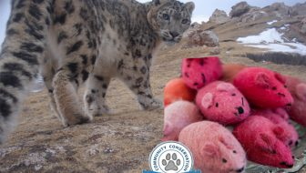 How Cat Toys Help Save Snow Leopards Giveaway