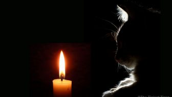 Keep Your Inner Light with the Help of your Cats