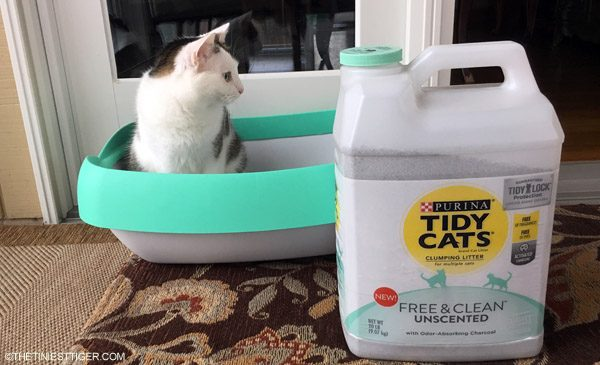 Annie with Tidy Cats Free & Clean