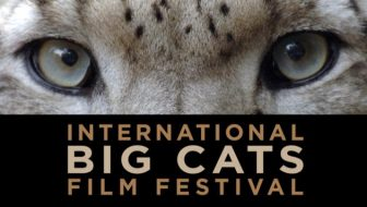 International Big Cats Film Festival