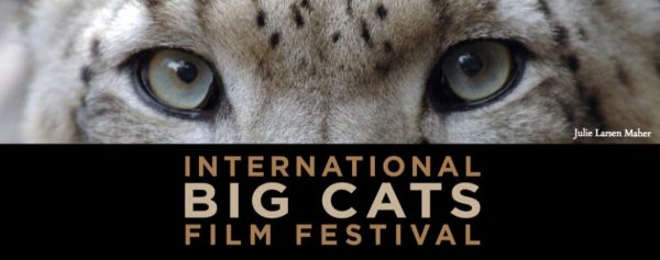 Big Cats Film Festival