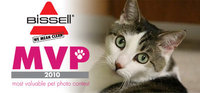 The Tiniest Tiger Wins Bissell MVP Pet Photo Contest