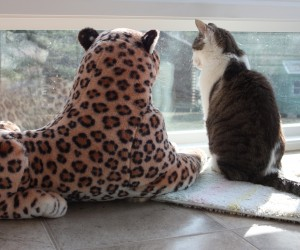 Gracey and Lazy Leopard Wait Patiently