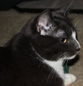 Tiny Timmy- Spokescat living with neurological damage from toxins