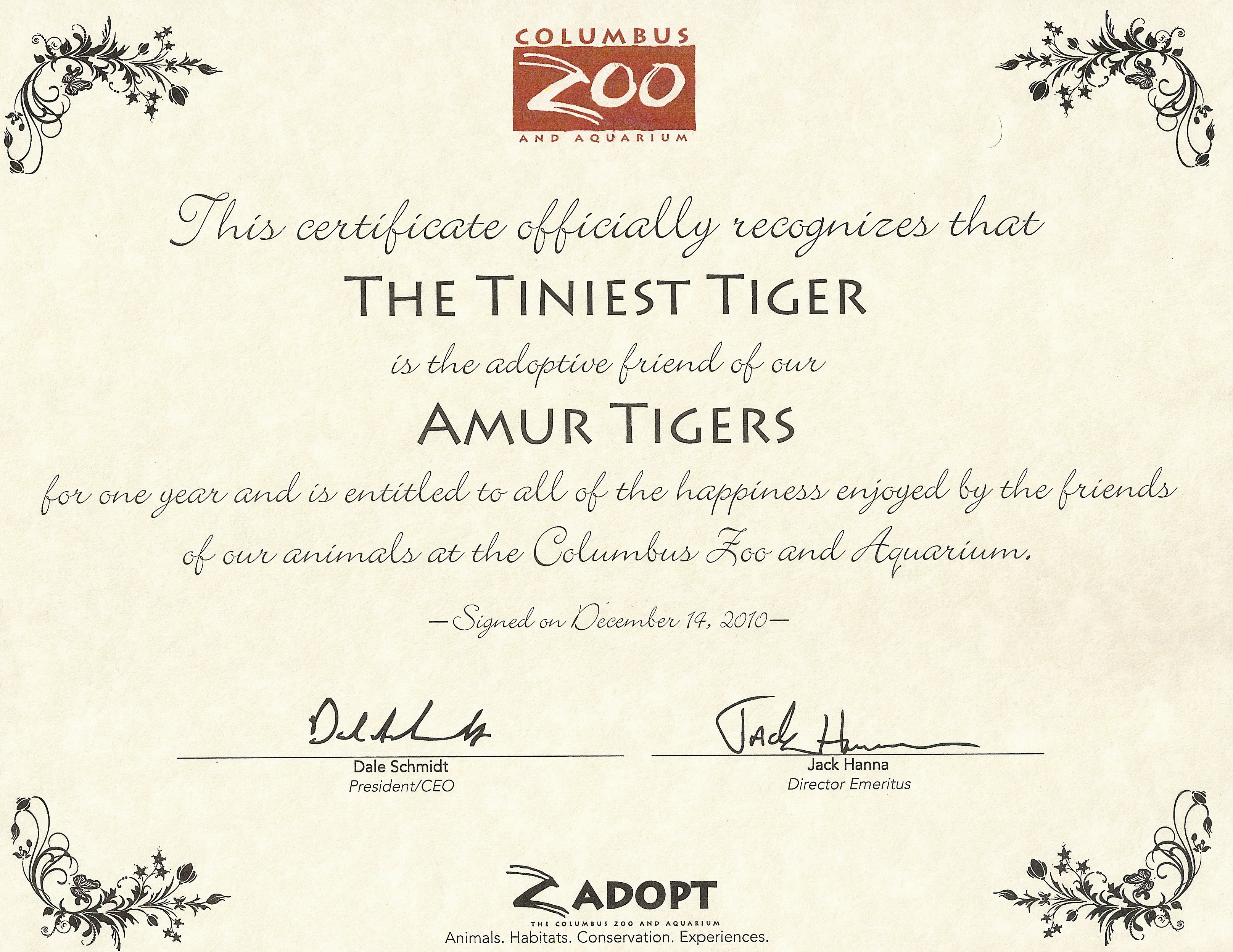The Columbus Zoos Amur Tigers The Tiniest Tiger The Tiniest Tiger