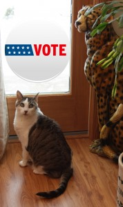 Vote Bad Kitty