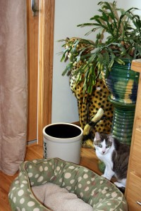 Gracey, The Tiniest Tiger Stalking the Cactus