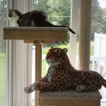 Gracey and Lazy Leopard share the CPT