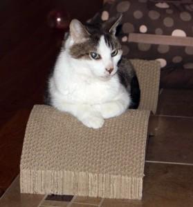 Gracey looking steamed on her scratcher