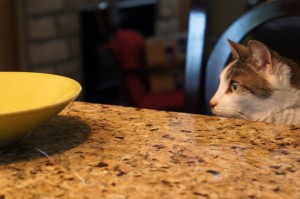 Gracey watches her dad cooking pasta