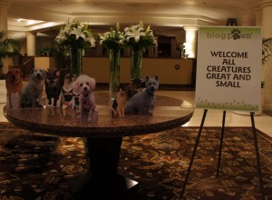Welcome to blogpaws