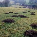 Mole holes