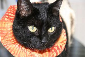 Birdsbesafe Cat Collar