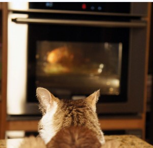 Gracey watching turkey roast