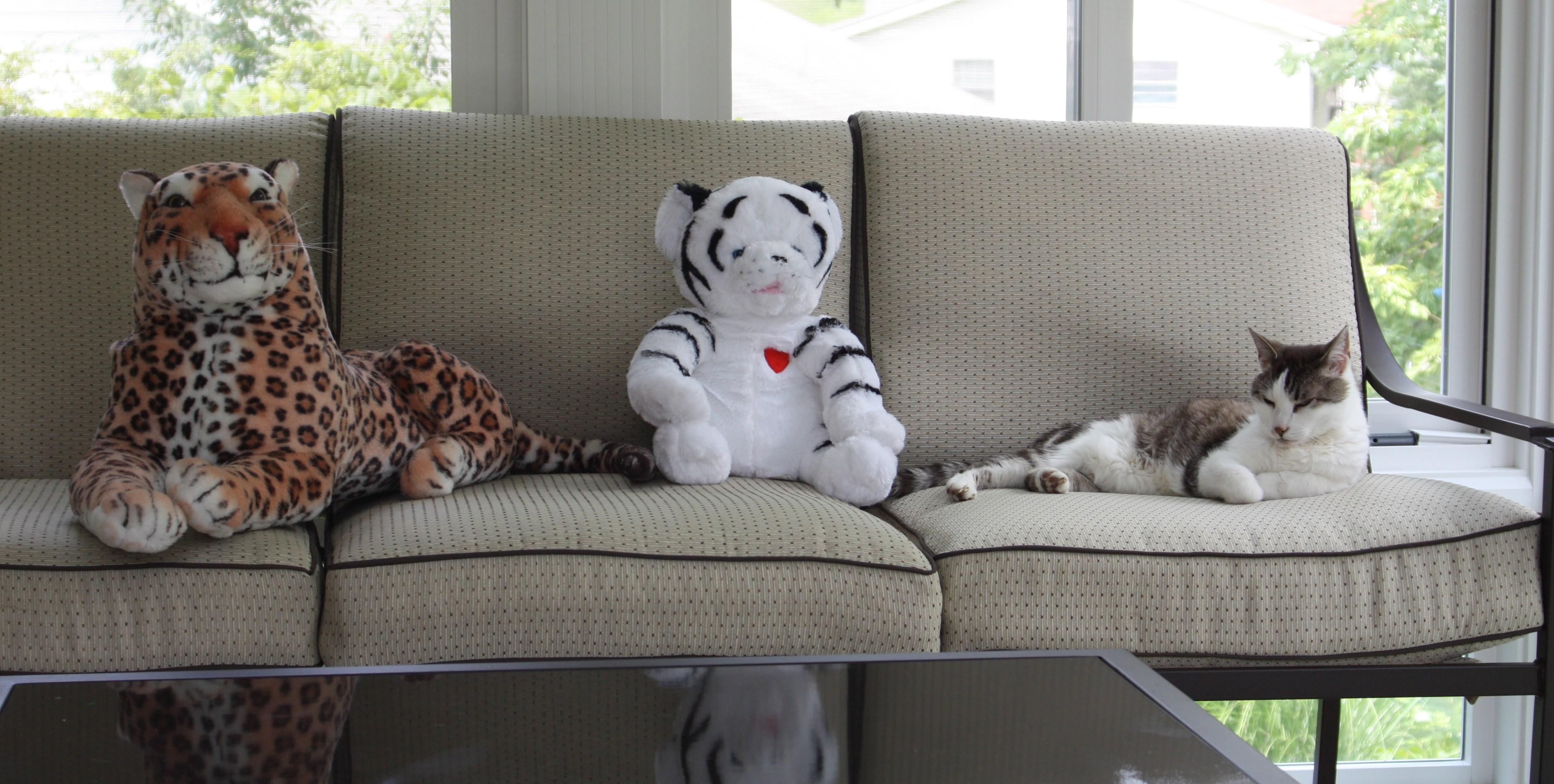 Tiny Tigers & Tots!  Win a Flip Mino HD Video Camera
