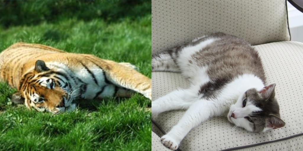 TTT's Tiger Imitation!  I know…it's Thursday