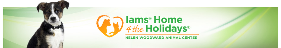 Iams Home 4 the Holidays! Help The Tiniest Tiger Feed Shelter Cats and Dogs by just leaving a Comment!