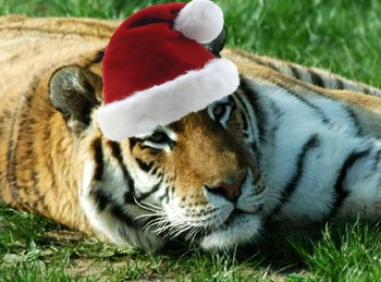 The Tiniest Tiger's 9 (now it is 1 ) Days of Christmas!