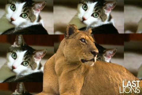 Save Our Big Cat Cousins