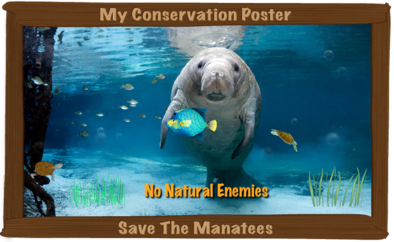 Show Me Your Manatee Conservation Poster!