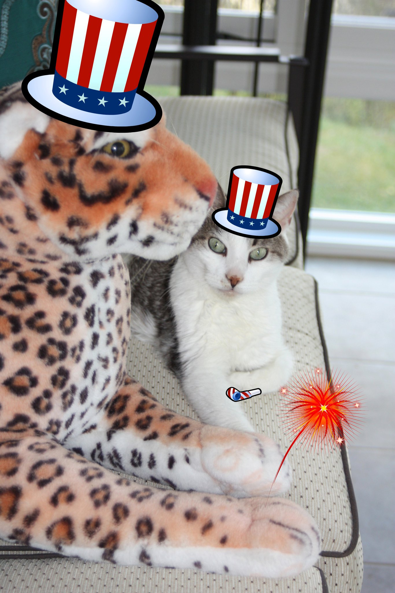 Please Consider Staying Home with your Cat on 4th of July