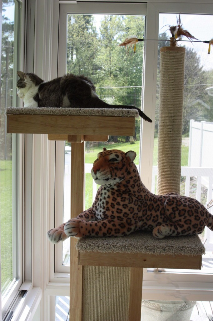 Cat Power Tower Gracey and Lazy Leopard