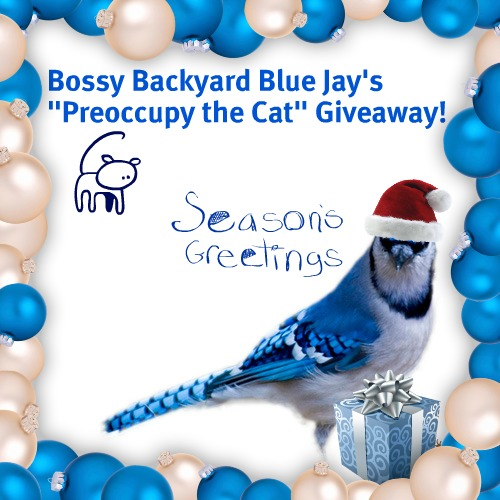 Bossy Backyard Blue Jay's Preoccupy the Cat Giveaway!