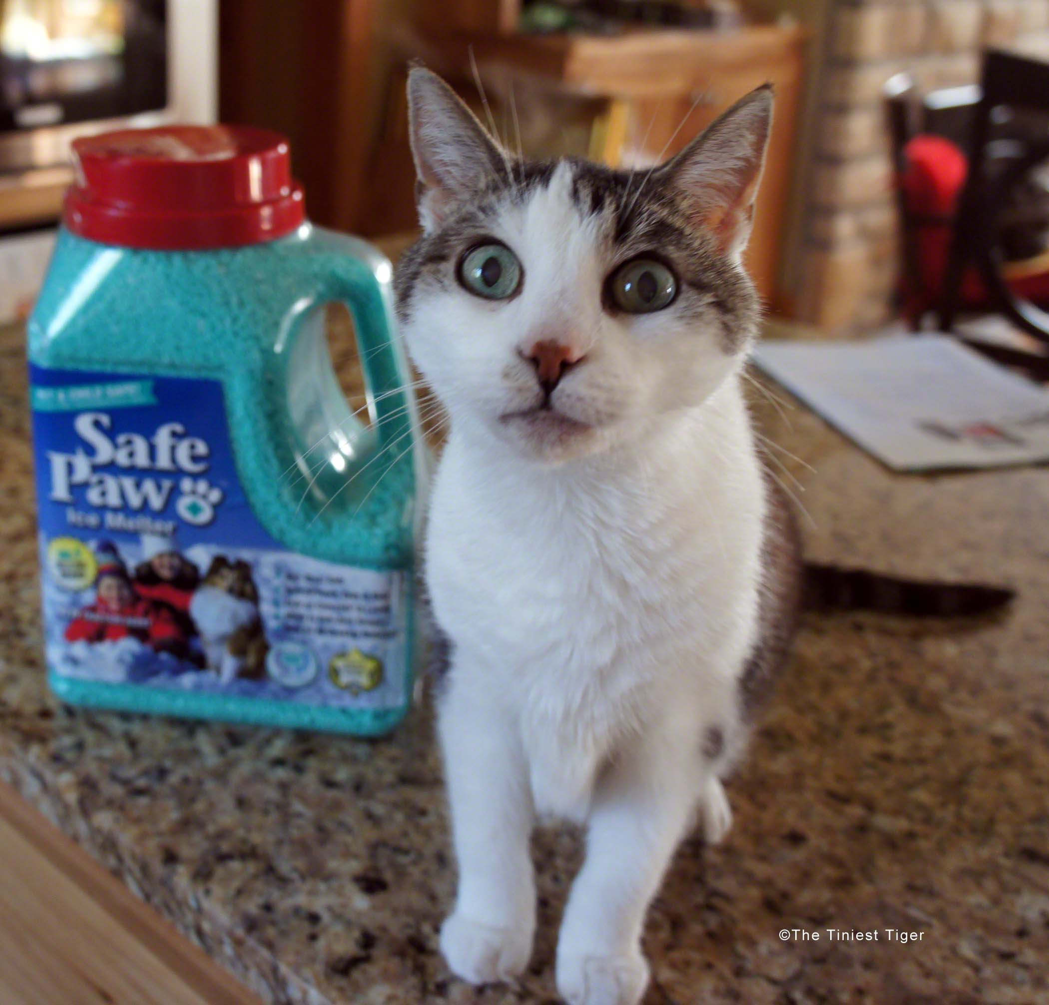Safe Paw means Safe Pets for You and Your Shelter Giveaway