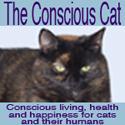 Conscious Cat Button