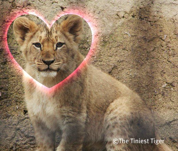 Lion Cub Heart
