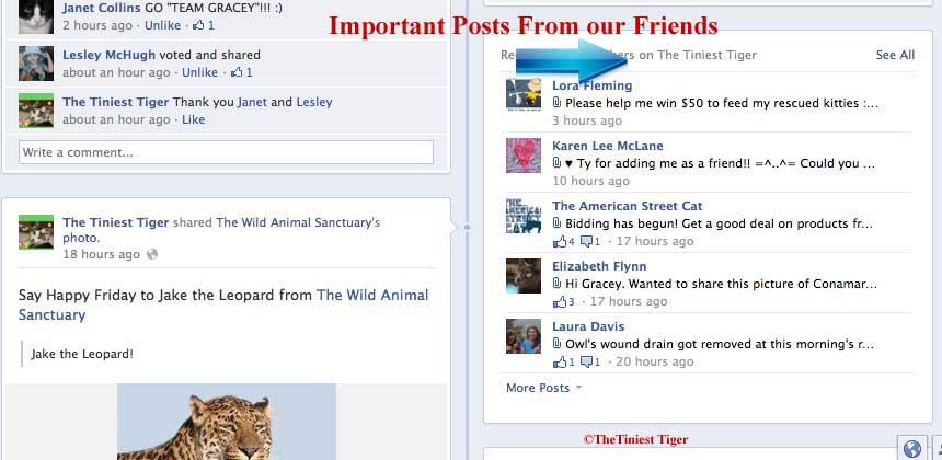 10 Timeline Tips from The Tiniest Tiger