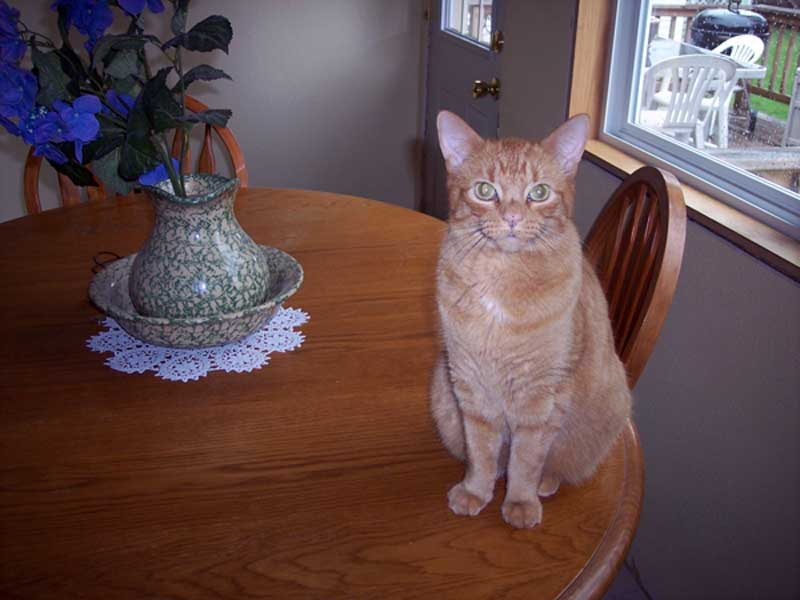 Iams Sr Plus Honorable Mention Jimmy the Cat
