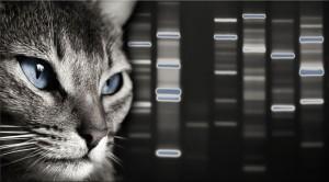 Signature DNA Cat