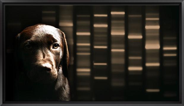 Signature DNA Dog