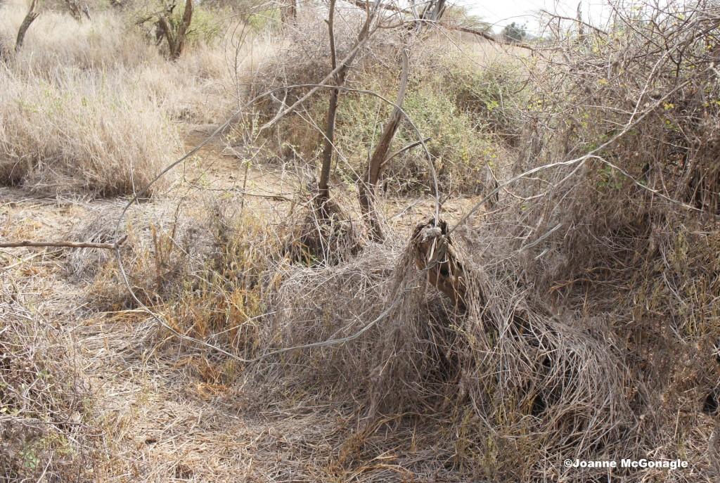 Snare found in bush