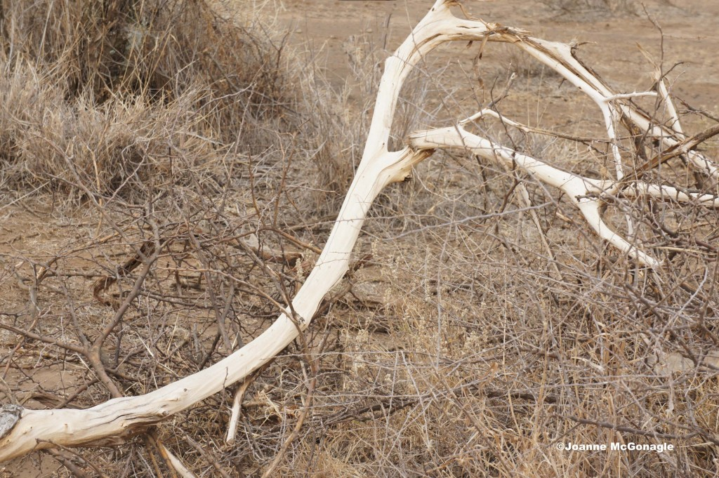 misplaced branch is a sign of a snare