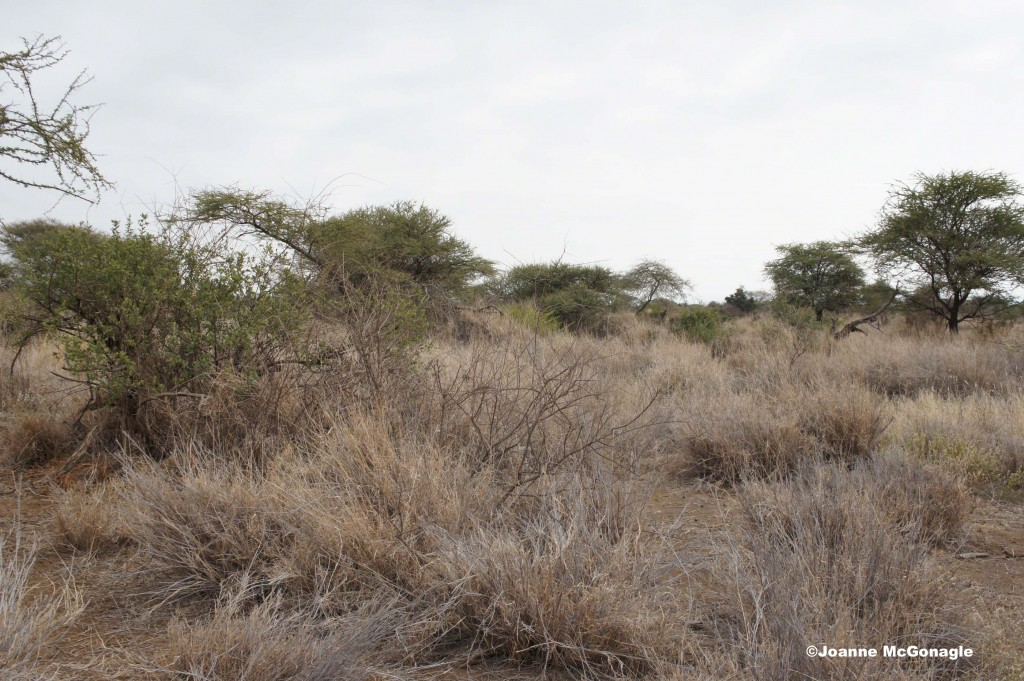 Vast area to look for snares