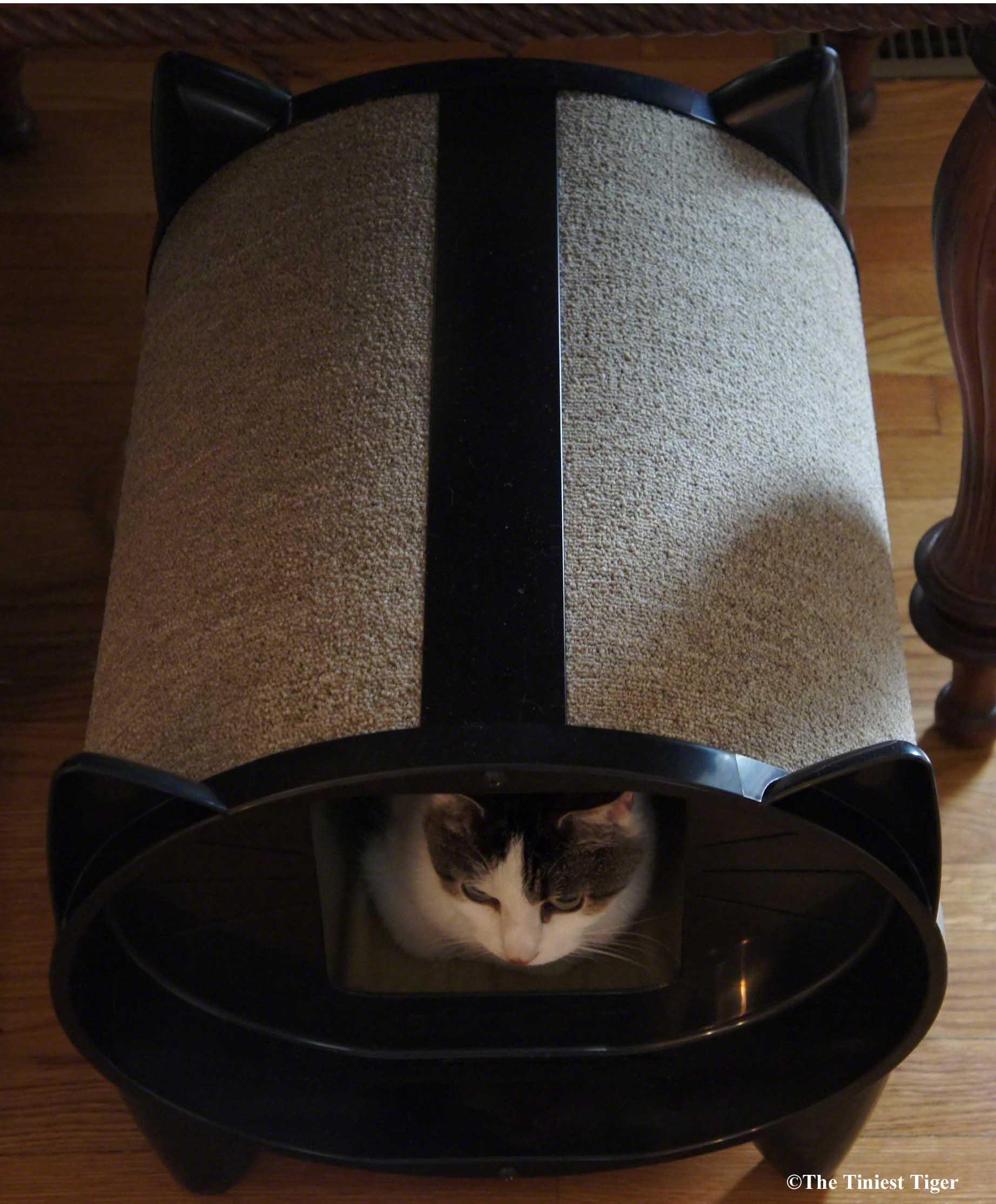 Cats Love KatKabins!  ScracthKabin Giveaway!