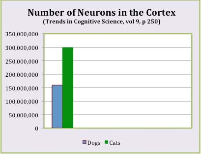 Neurons in the cortex of dogs and cats
